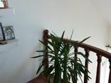 Vila cu 5 camere de vanzare in Breaza (zona Semicentrala). Miniatura #126645 pentru oferta X213D7.