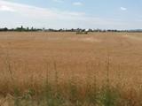Teren Extravilan de vanzare in Baicoi (zona Floresti). Miniatura #129207 pentru oferta X31975.