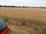 Teren Extravilan de vanzare in Baicoi (zona Floresti). Miniatura #129208 pentru oferta X31975.
