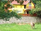 Vila cu 8 camere de vanzare in Valea Doftanei (zona Tesila). Miniatura #133783 pentru oferta X21AF4.