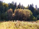 Teren de vanzare in Predeal (zona Valea Rasnoavei). Miniatura #134231 pentru oferta X31B0F.