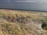 Teren de vanzare in Scorteni (zona Bordeni). Miniatura #134990 pentru oferta X31B3B.