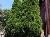 Vila cu 4 camere de vanzare in Comarnic (zona Podul Vartos). Miniatura #135650 pentru oferta X21B6A.