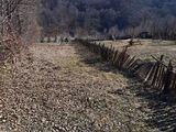 Teren de vanzare in Valea Doftanei (zona Lacul Paltinu). Miniatura #136550 pentru oferta X31B9F.