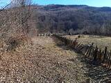 Teren de vanzare in Valea Doftanei (zona Lacul Paltinu). Miniatura #136551 pentru oferta X31B9F.