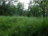 Teren de vanzare in Valea Doftanei (zona Traisteni). Miniatura #137483 pentru oferta X31BF7.