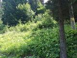 Teren de vanzare in Predeal (zona Malul Ursului). Miniatura #137645 pentru oferta X31BFA.