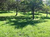 Teren de vanzare in Valea Doftanei (zona Tesila). Miniatura #140663 pentru oferta X3123C.