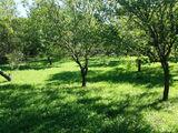 Teren de vanzare in Valea Doftanei (zona Tesila). Miniatura #140664 pentru oferta X3123C.