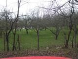 Teren de vanzare in Campina (zona Voila). Miniatura #58172 pentru oferta X36D2.