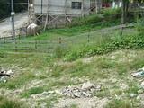 Teren de vanzare in Sinaia (zona Furnica). Miniatura #107529 pentru oferta X33EC.