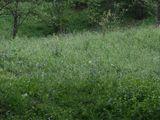 Teren de vanzare in Provita (zona Provita de Sus). Miniatura #76526 pentru oferta X36A2.