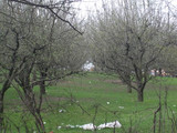 Teren de vanzare in Campina (zona Voila). Miniatura #58173 pentru oferta X36D2.
