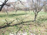 Teren de vanzare in Campina (zona Semicentrala). Miniatura #110625 pentru oferta X3EA.