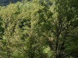 Teren de vanzare in Provita (zona Provita de Sus). Miniatura #76527 pentru oferta X36A2.