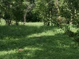 Teren de vanzare in Provita (zona Provita de Sus). Miniatura #76520 pentru oferta X36A2.