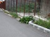 Teren de vanzare in Busteni (zona Poiana Tapului). Miniatura #92986 pentru oferta X3FF0.