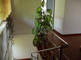 Vila cu 4 camere de vanzare in Campina (zona Semicentrala). Miniatura #99986 pentru oferta X211AE.