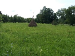 Teren Intravilan de Vanzare in Brebu (Pe Camp, Prahova)