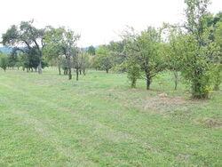 Teren de Vanzare in Brebu (Pe Camp, Prahova)