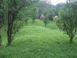 Teren de Vanzare in Breaza (Gura Beliei, Prahova)